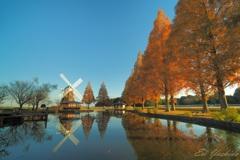 紅葉するメタセコイアと風車