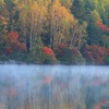 朝靄漂う秋の森