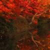 紅葉輝く朝の水辺