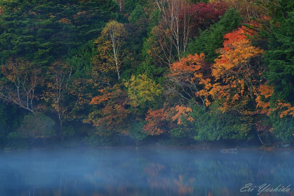 朝靄と紅葉する木々たち