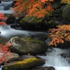 輝く秋の水辺