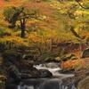 黄金色に輝く秋の水辺