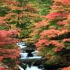 彩る渓谷の秋