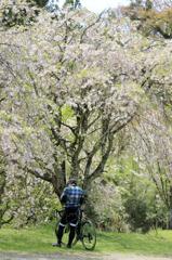 春の日の一風景