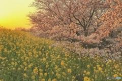 春は夕暮れⅡ