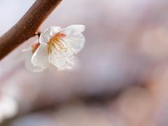まだ浅い春に。。。