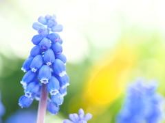春の饗宴。。。