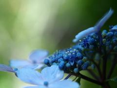 青い結晶。。。