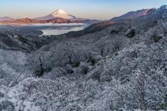 雪の華咲く朝に