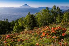 ツツジ咲く丘で
