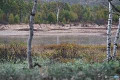 微雨降る小田代の池