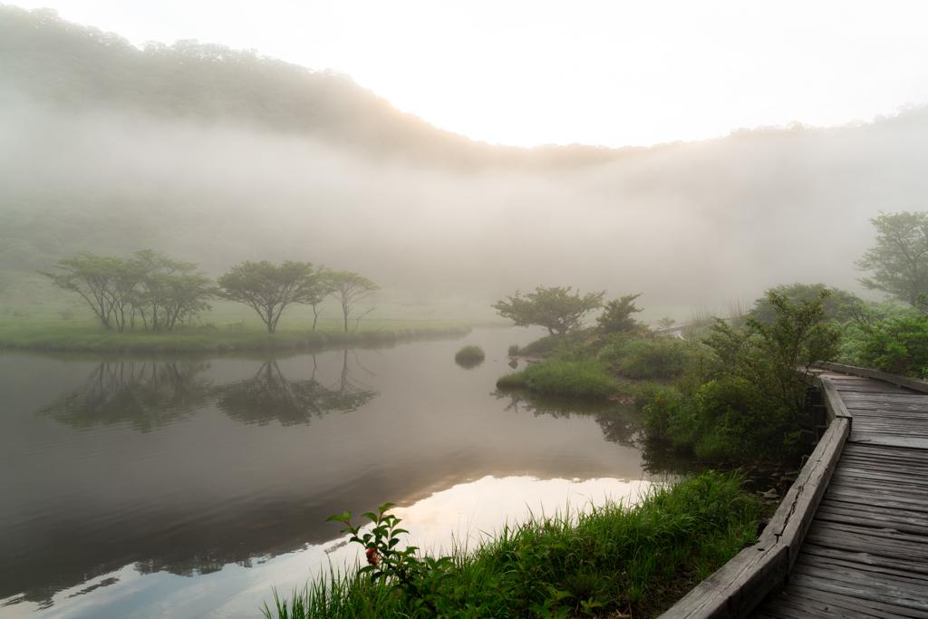 霧の木道・・