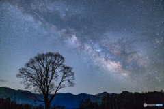 One tree and Milky way