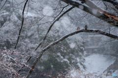 雪だね 寒いね