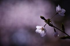 Spring story  ①