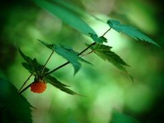 一粒の木苺