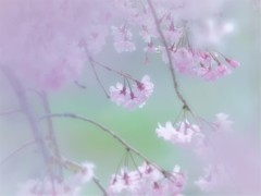 束の間の春 ③