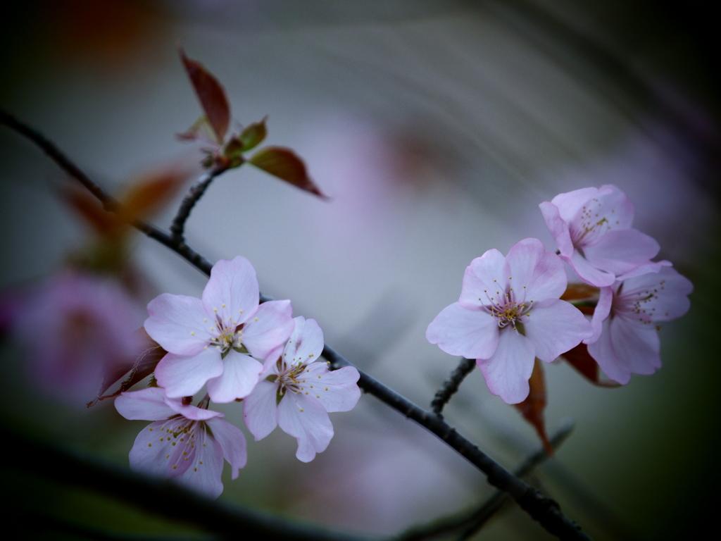 束の間の春 ②