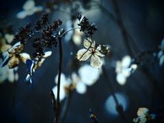 不悉の花 ①