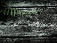 どぶ板と羊歯