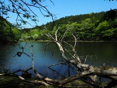 初夏の湖沼  ①