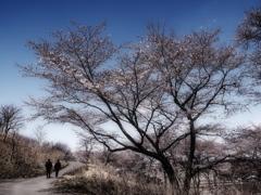 早春の小道