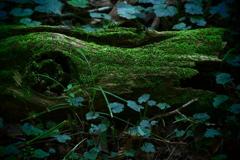 森に棲む何か