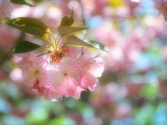 春色のラビリンス
