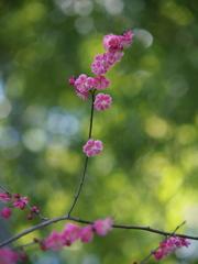 時は春 ① ~梅花~