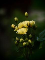 薔薇の花束を貴女へ