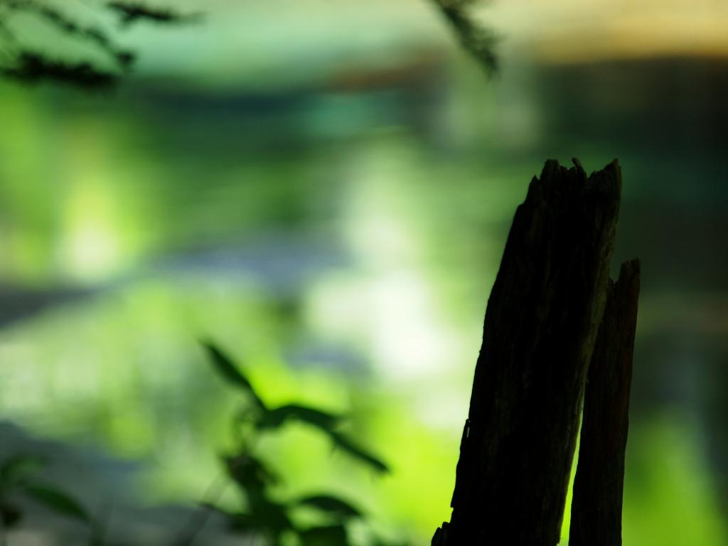 翠の川面 ⑤