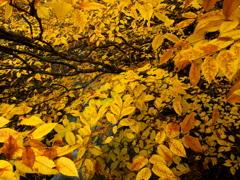 yellow-storm