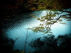 湖上の樹  ②