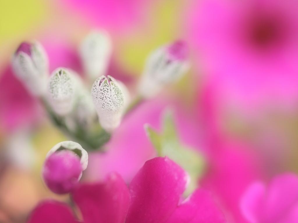 春色のサプリ - mental care -