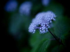 木陰の星雲
