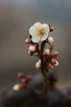 小春日和 梅の香りに誘われて ③