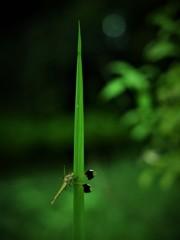 休日の蜻蛉