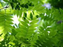 六月の葉っぱ  其の三