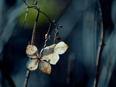 不悉の花 ②