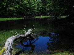 初夏の湖沼  ②