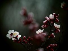 ある春の日の愁い
