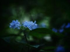 エルフの花束