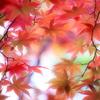 秋日に舞う