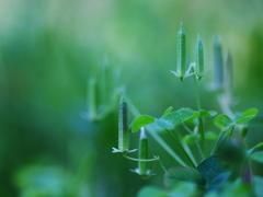 小さな緑のオベリスク