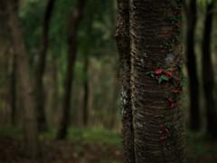 密やかに秋  ①