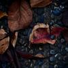 路傍の落葉