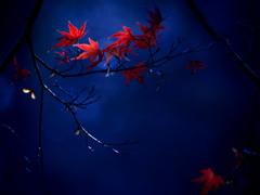 蒼い森のメモリー