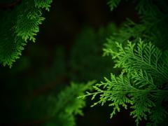 緑の誕生 ①