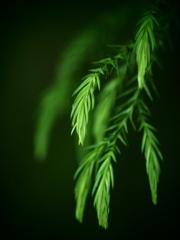 緑の誕生 ②