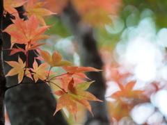 秋・好日  ①
